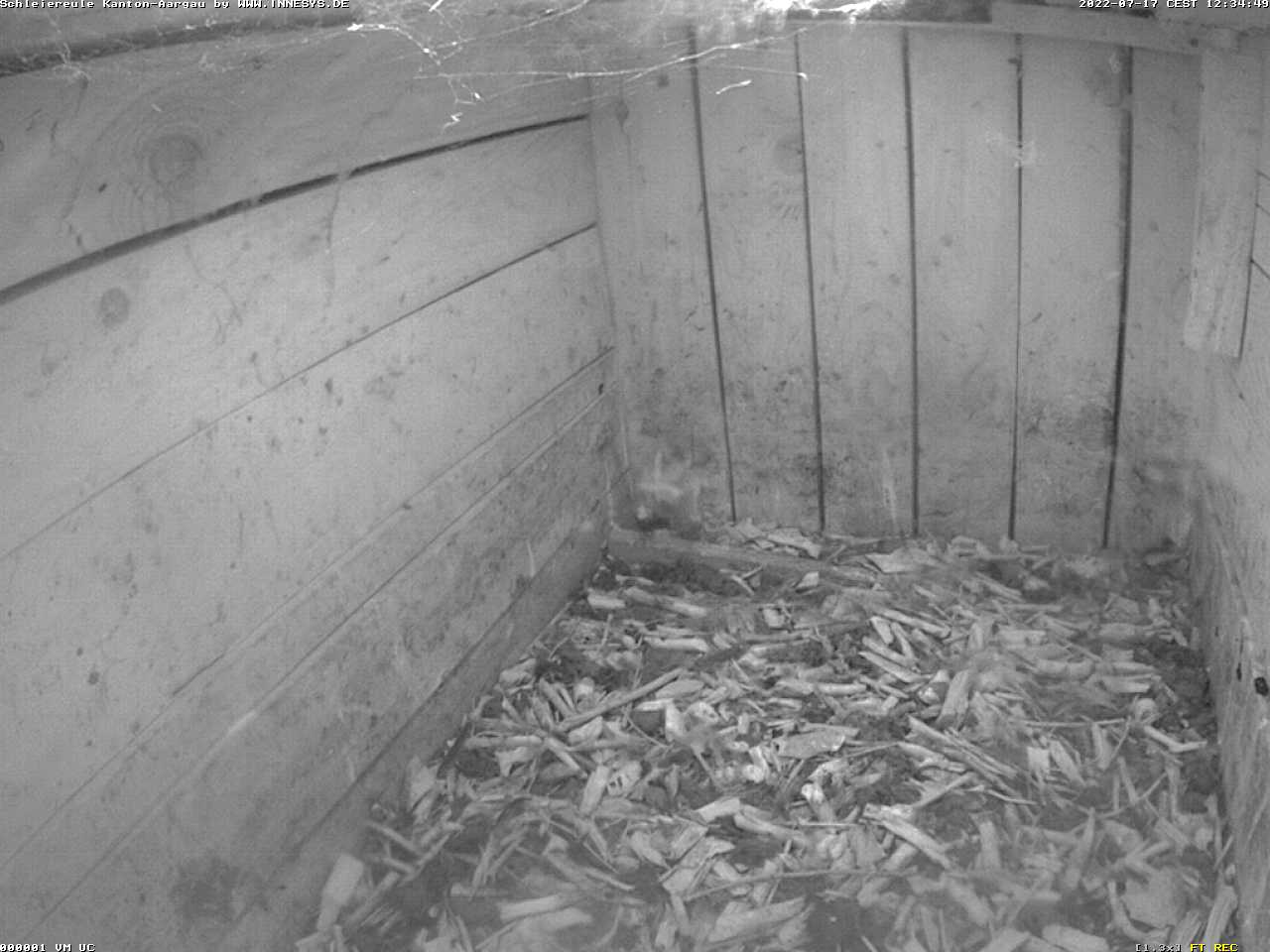Die Webcam überträgt ein Bild aus dem Schleiereulen-Brutkasten. Das Bild aktualisiert alle 5 Sekunden.